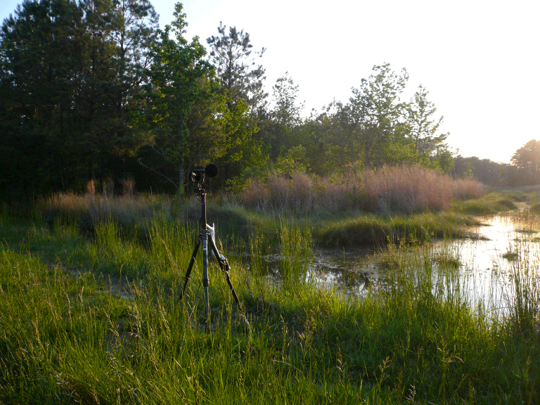 Image of Blackwater NWR recording area
