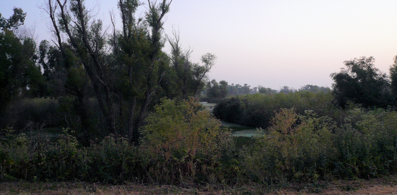 Image of dawn at the recording site
