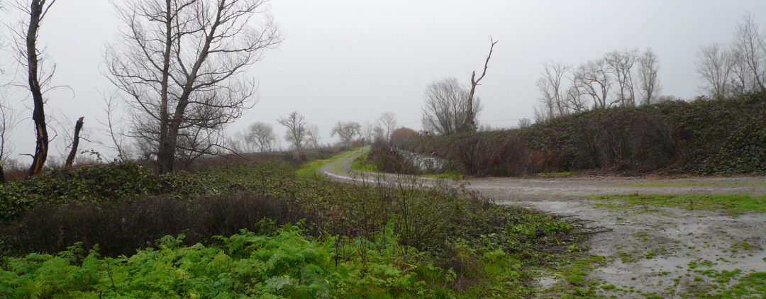 Image of Gray Lodge Wildlife area on the Morning on February 15, 2009